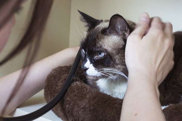Cat Wellness Medical