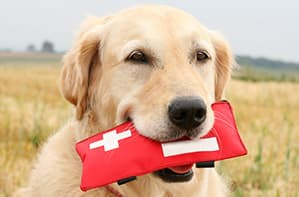 Dog carrying a first aid kit