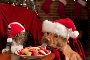 dog and cat sneaking holiday treats